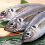 【魚霸海鮮】頂級現撈竹筴魚
