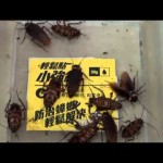 小強您別來我家::消滅蟑螂就用攻蟑剋星-輕鬆點小強絕